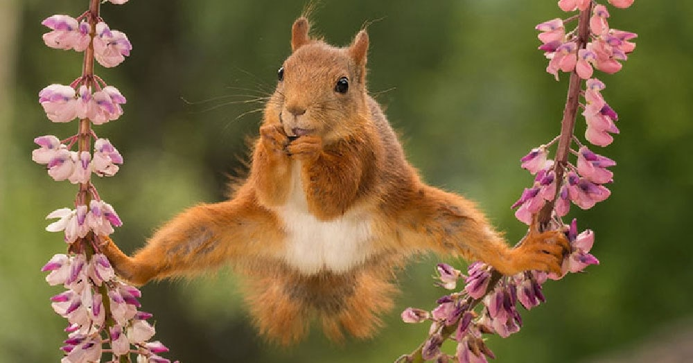 23 фотографии, которые претендуют на звание лучшей комедийной фотографии животных 2018 года