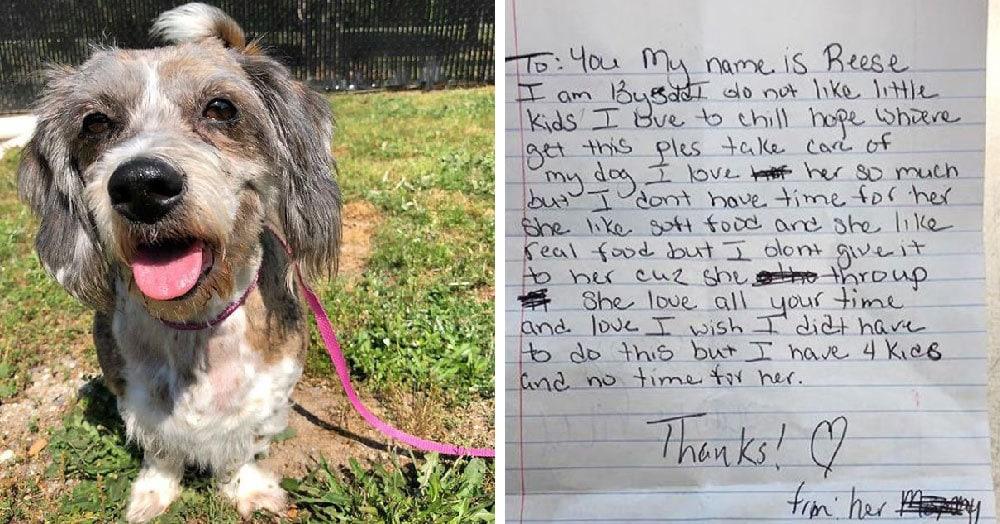 Женщина решила избавиться от собаки и подбросила её в чужой двор. Но приложила эту грустную записку