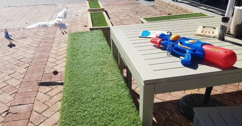 Посетителей этого кафе постоянно тревожили чайки, и его хозяева придумали эффектное и очень весёлое решение