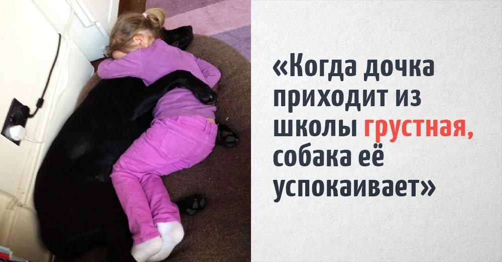 Пользователи сети поделились снимками, которые доказывают, что собаки лучше всех знают, что такое забота