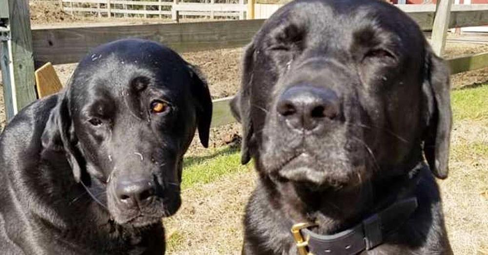 Два пса украли обед у почтальона, но он не обиделся, а оставил милую записку. Хозяева в долгу не остались