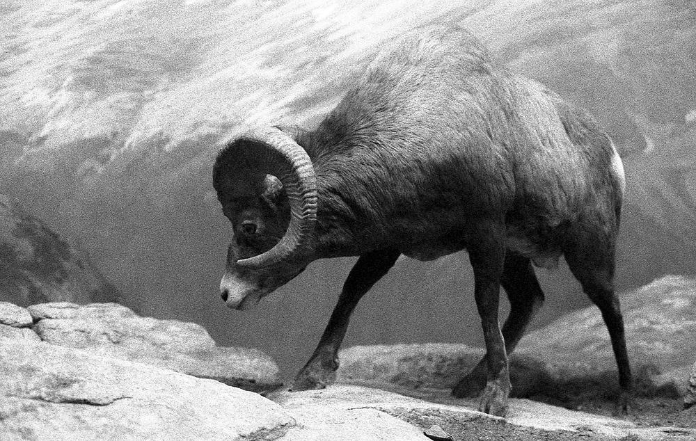 Фотограф создал серию снимков диких животных, но на них изображено совсем не то, что кажется на первый взгляд