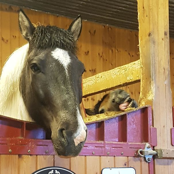 Horses, Such Elegant Creatures