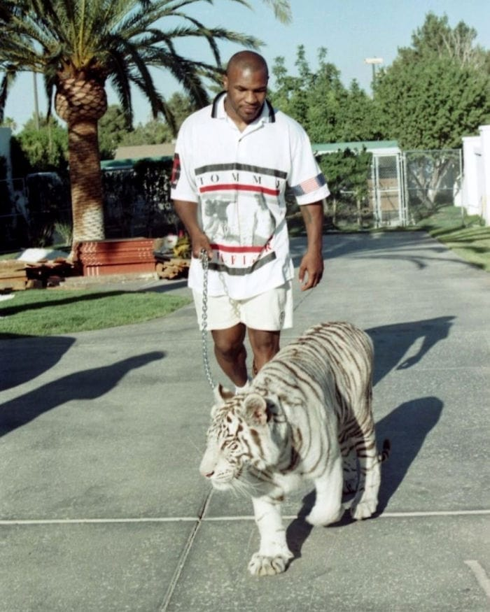 Mike Tyson Went And Bought Some Tigers. Precisely, Three Tigers For 4,000