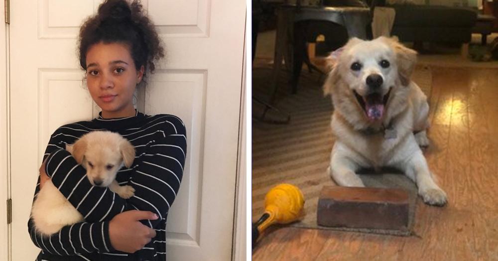 Девушка рассказала о странной дружбе своего щенка с кирпичом. И оказалось, что этот пёс такой не один