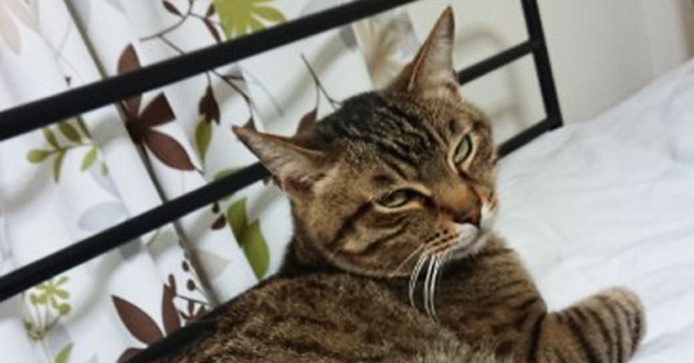 Если ваши кошки не дают вам спать по ночам, то один японец придумал простой способ, как их усмирить