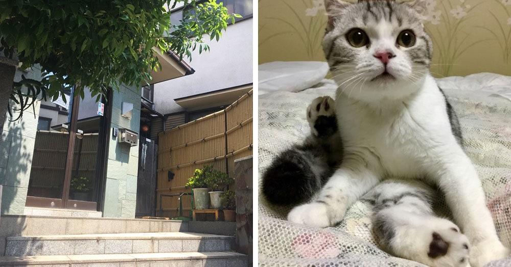 Этот японский отель придумал хитрость, и теперь у них нет отбоя от постояльцев. А всё из-за котиков!