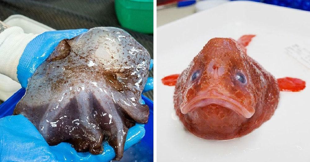 Учёные показали, кто обитает на дне у берегов Австралии. И под водой там не менее страшные твари, чем на суше
