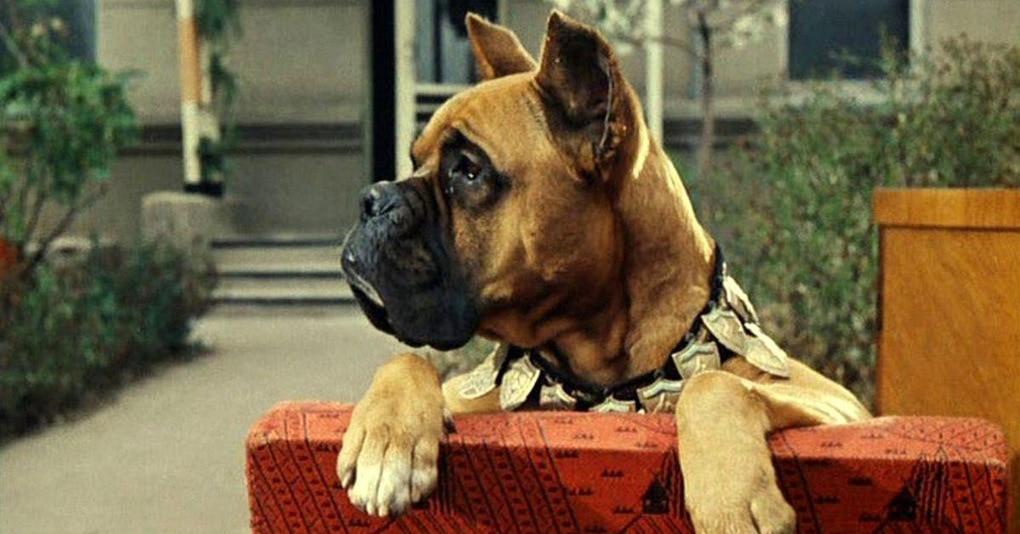 Тест: Угадайте известный фильм по собаке