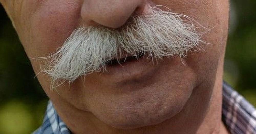 Тест: Кому принадлежат эти усы?