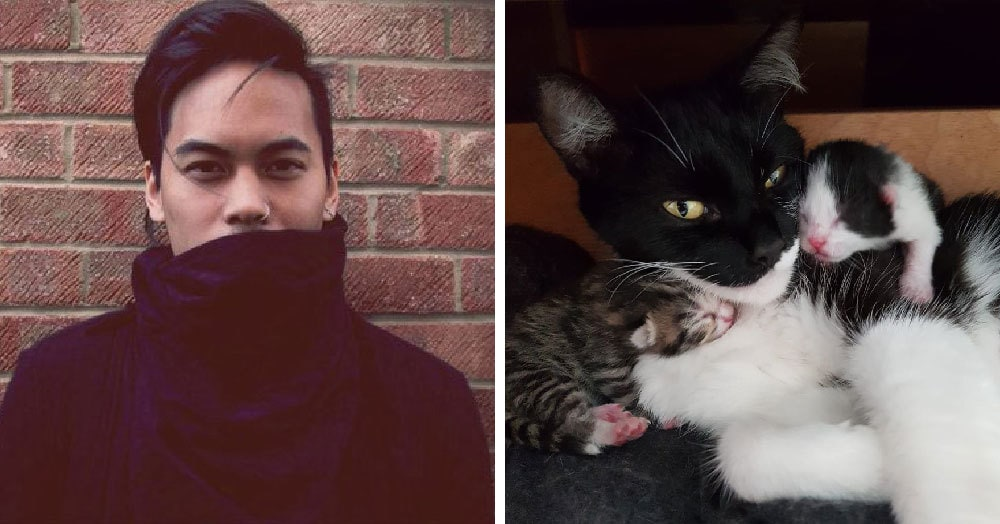 Парень пошёл в комнату, чтобы взять свитер, а нашёл кошку с новорождёнными котятами. Но у него нет животных