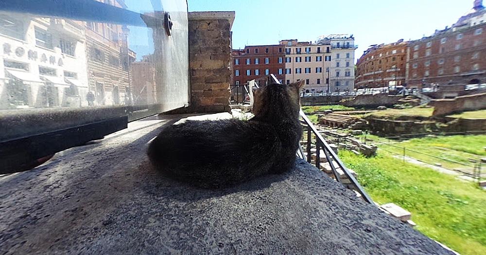 На панораму Google Street view в Риме случайно попал кот. Судя по его морде, он этим очень недоволен