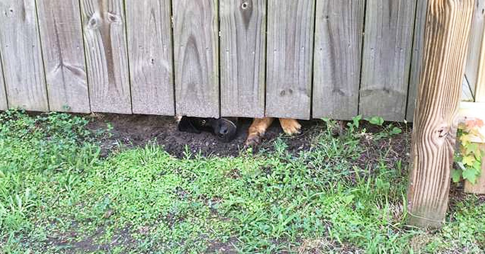 После приезда соседки мужчина почувствовал, что за ним следят. И «шпионов» становилось всё больше