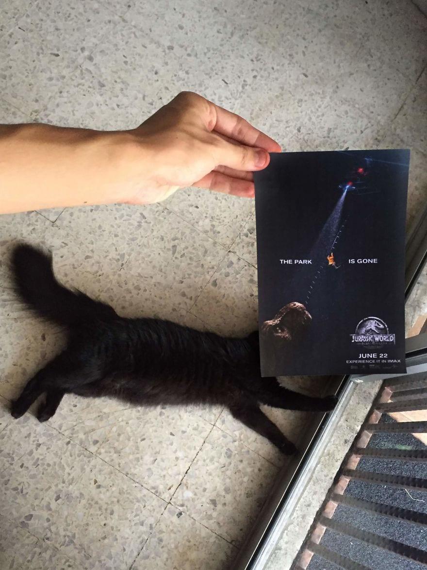 Фотограф охотится за котами, чтобы совместить их пушистые тушки и кинопостеры. А коты круто вживаются в свои роли 13