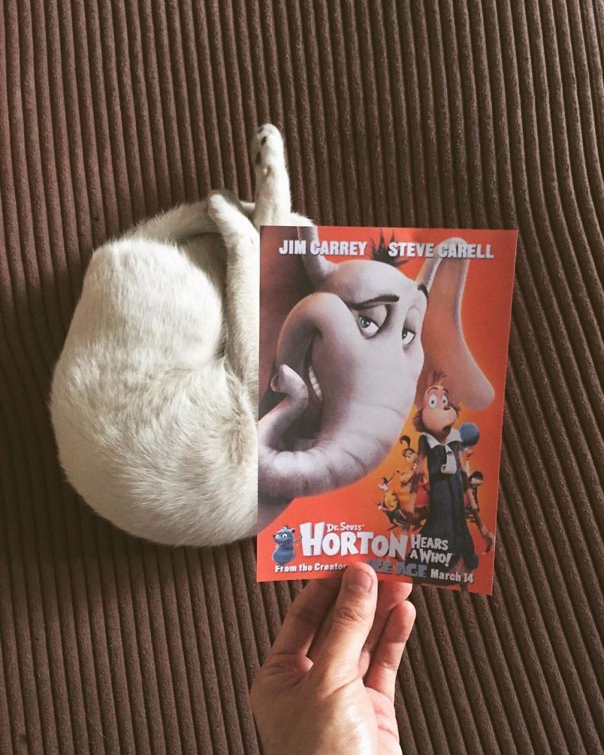 Фотограф охотится за котами, чтобы совместить их пушистые тушки и кинопостеры. А коты круто вживаются в свои роли 15