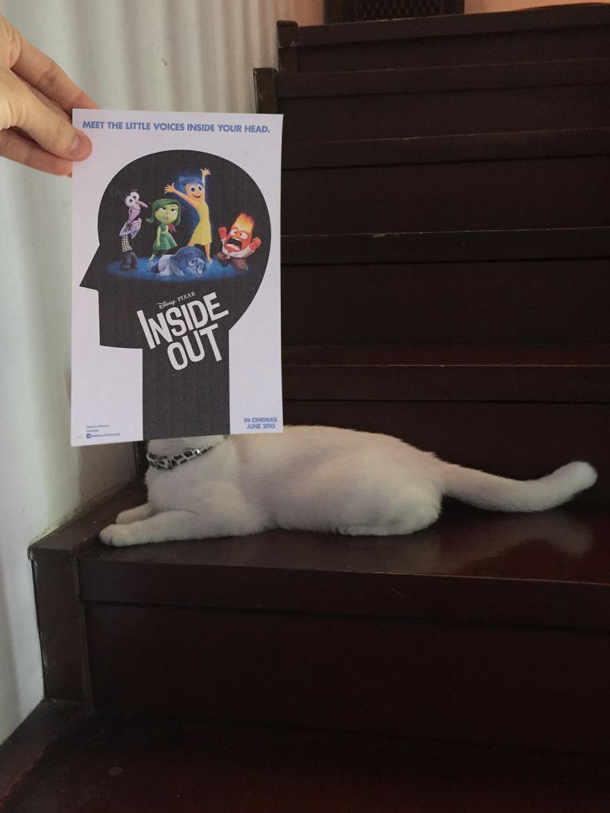 Фотограф охотится за котами, чтобы совместить их пушистые тушки и кинопостеры. А коты круто вживаются в свои роли 18