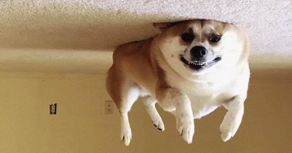 В интернете заметили, что переворачивать фотки собак, лежащих на полу — крутая идея. И понеслось…