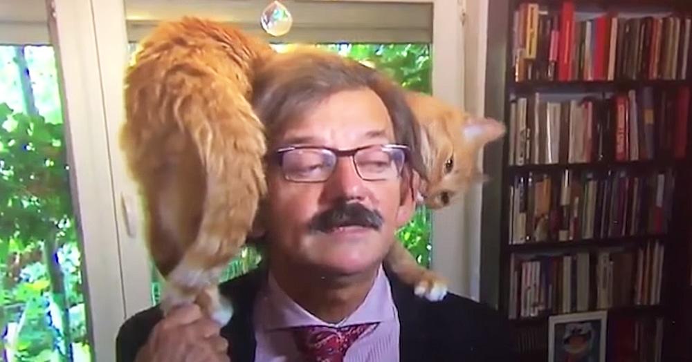 Польский историк давал серьёзное политическое интервью. Но у его кота были другие планы