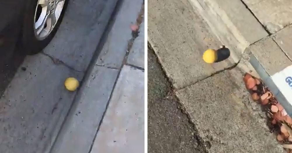 На этом двухминутном видео лимон катится по дороге. Но напряжение такое, что вы досмотрите до конца