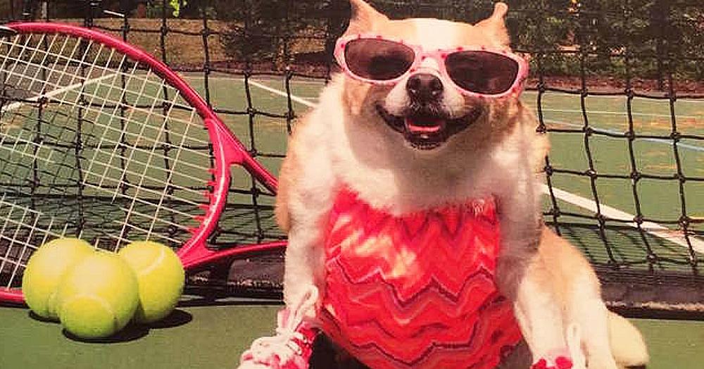 Эта собачка весила в 2 раза больше нормы и ей прописали фитнес. За её похудением следило даже телевидение!