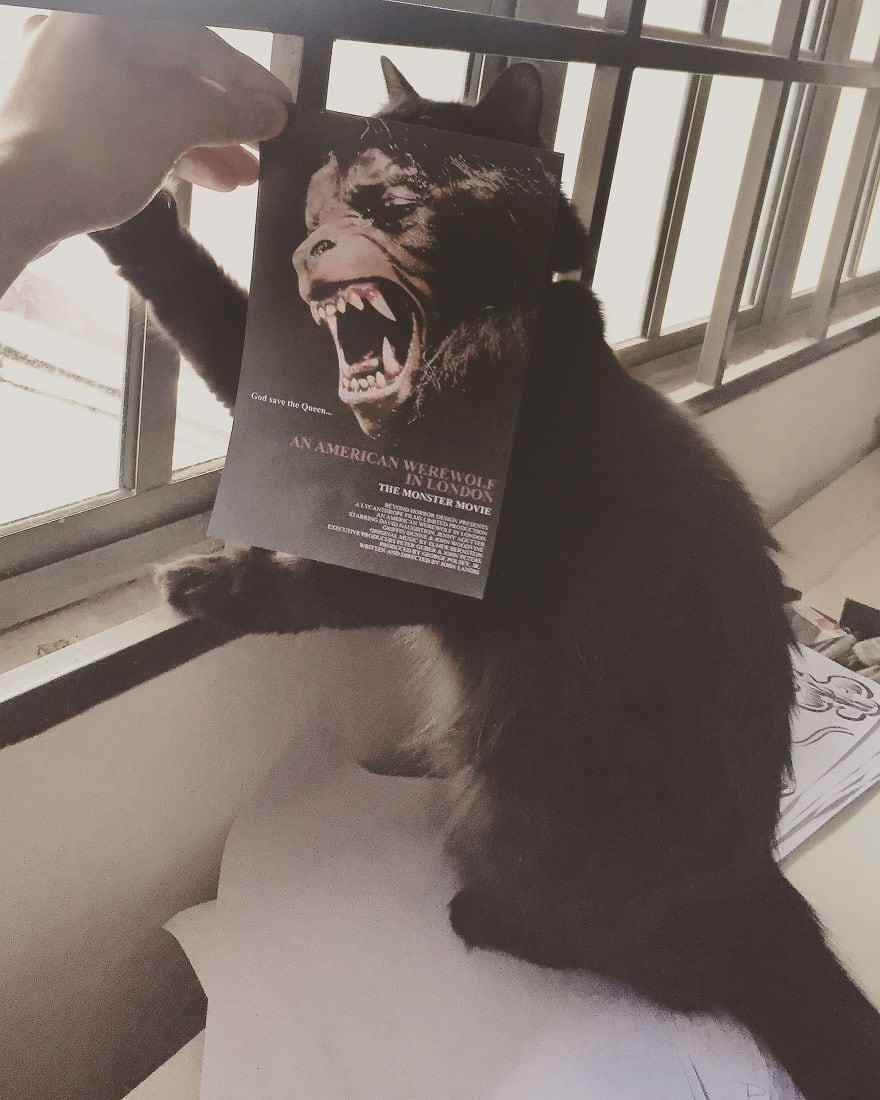 Фотограф охотится за котами, чтобы совместить их пушистые тушки и кинопостеры. А коты круто вживаются в свои роли 3