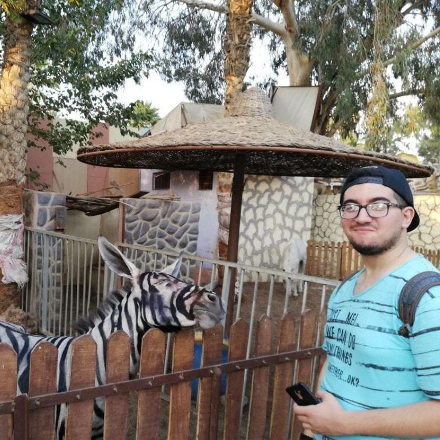 Парень нашёл в зоопарке зебр, которые выглядели очень подозрительно 15