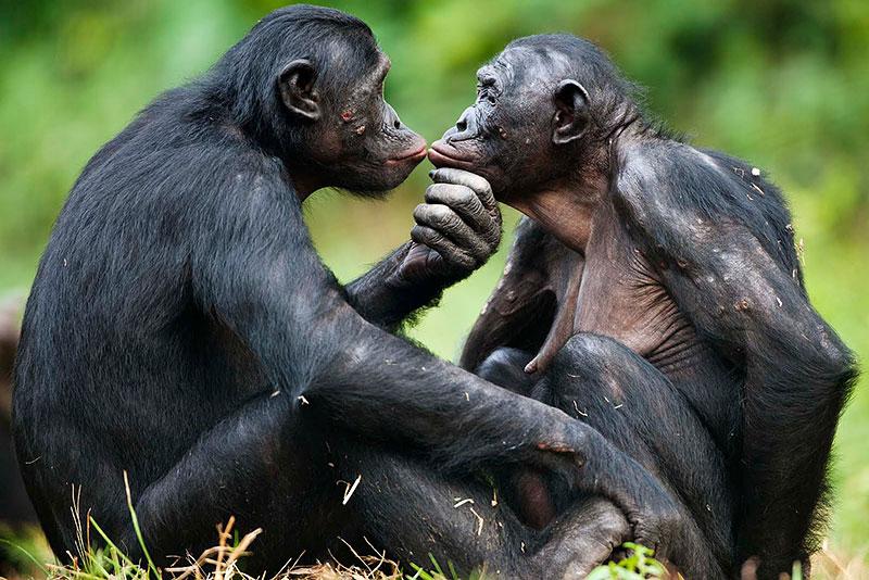 Сотрудник зоопарка поделился малоизвестными фактами о животных, которые перевернут многие стереотипы 8