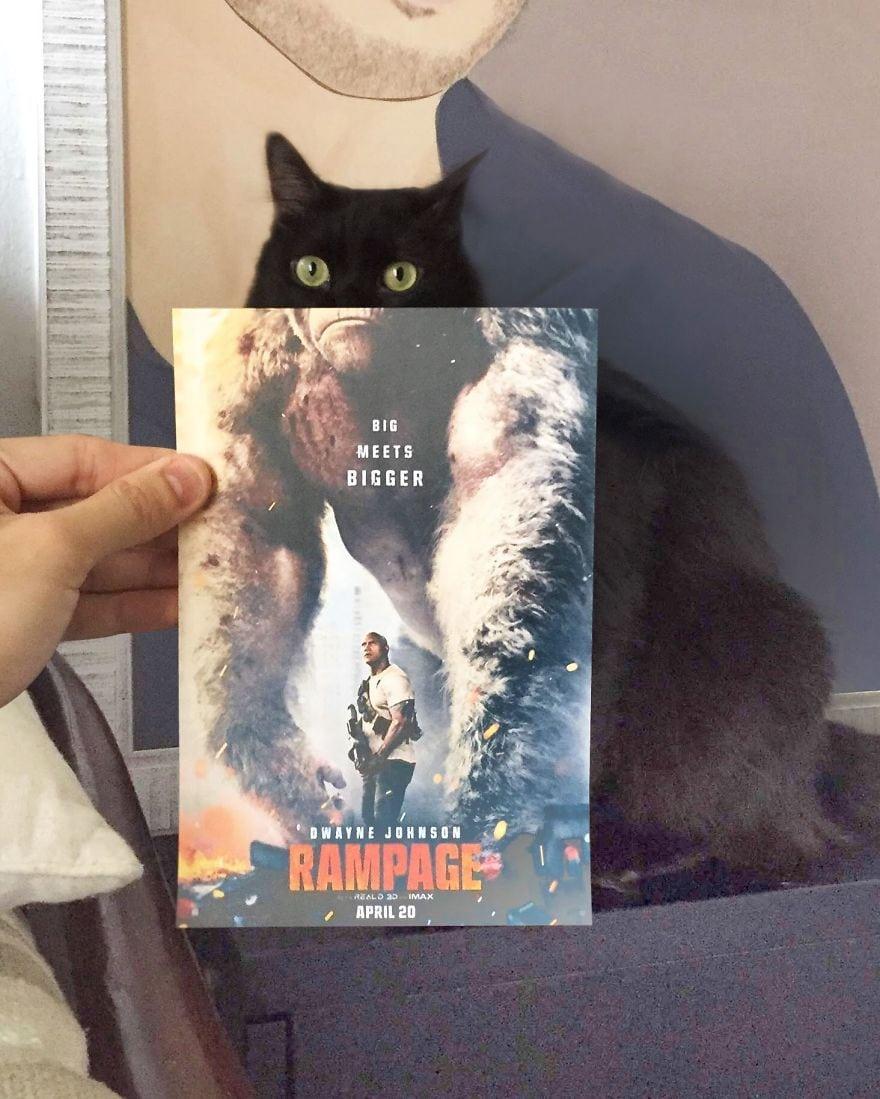 Фотограф охотится за котами, чтобы совместить их пушистые тушки и кинопостеры. А коты круто вживаются в свои роли 5