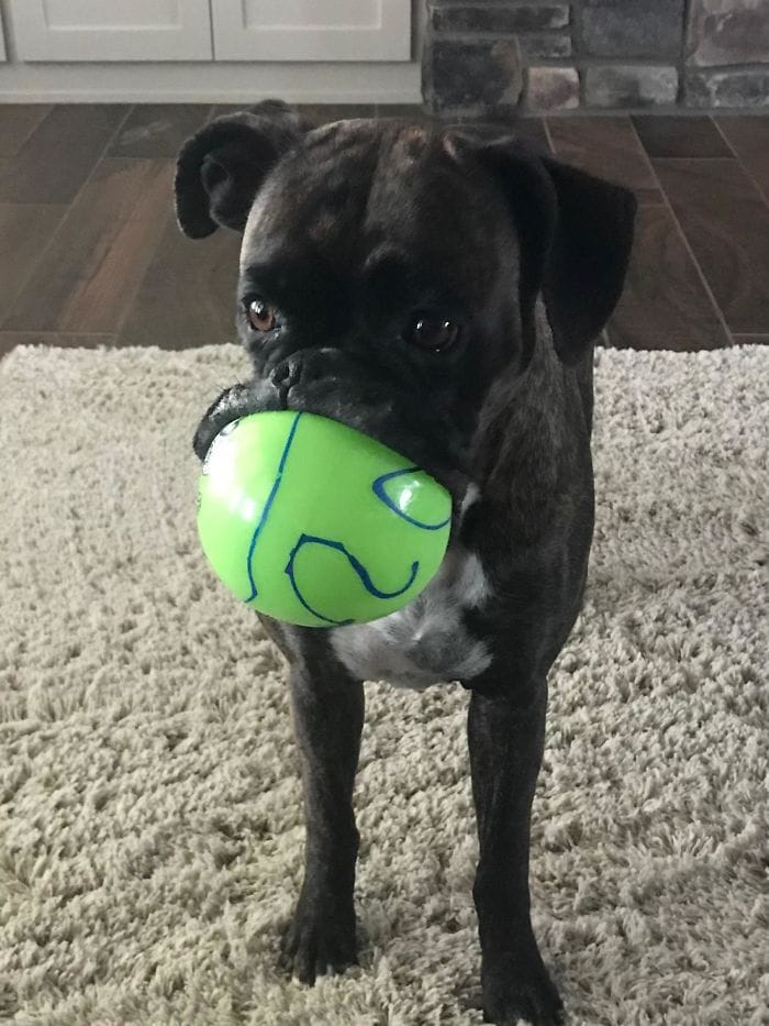 My Parents Boxer With Her Favorite Ball