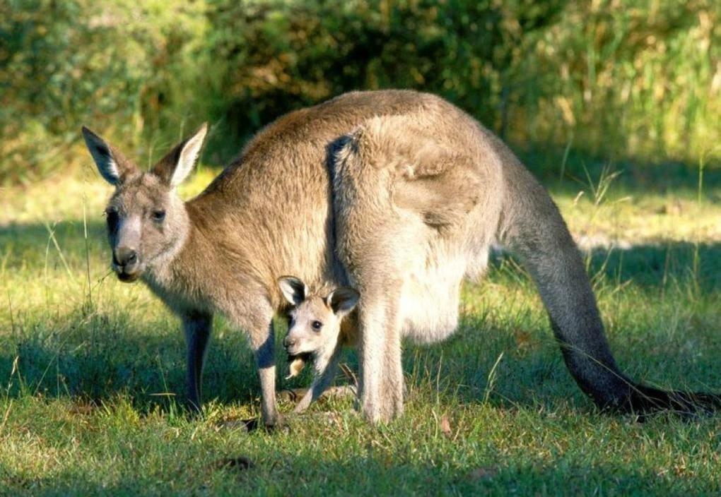 Сотрудник зоопарка поделился малоизвестными фактами о животных, которые перевернут многие стереотипы 1