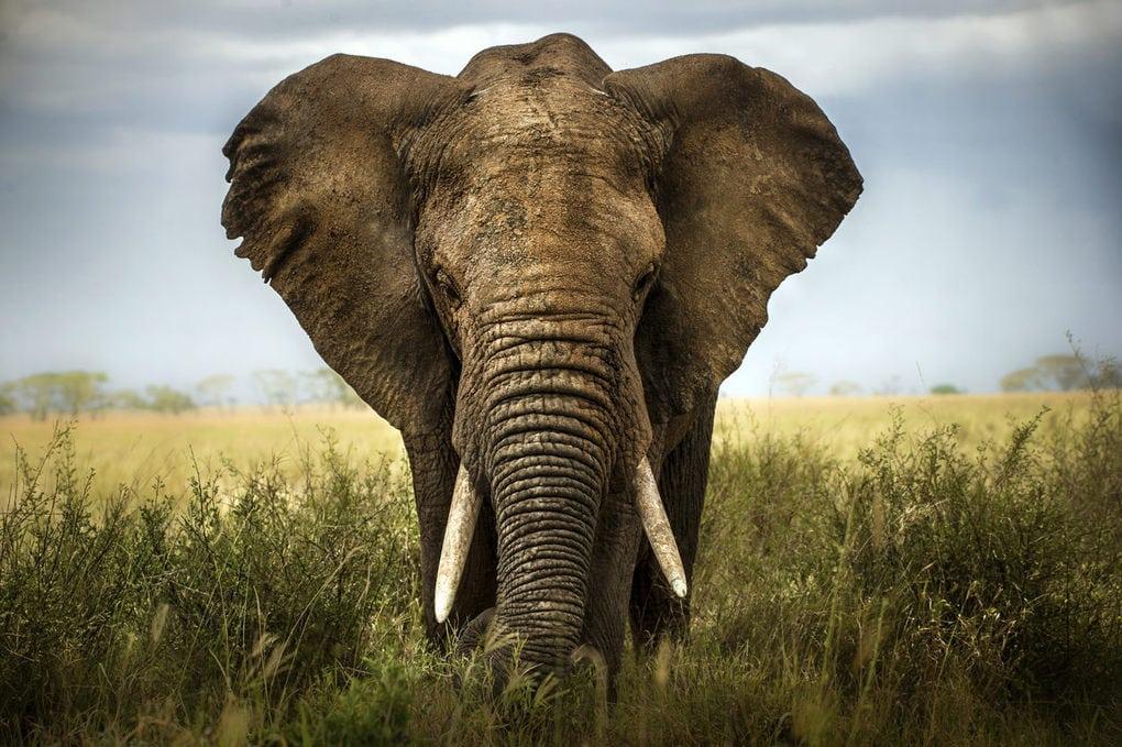 Сотрудник зоопарка поделился малоизвестными фактами о животных, которые перевернут многие стереотипы 3