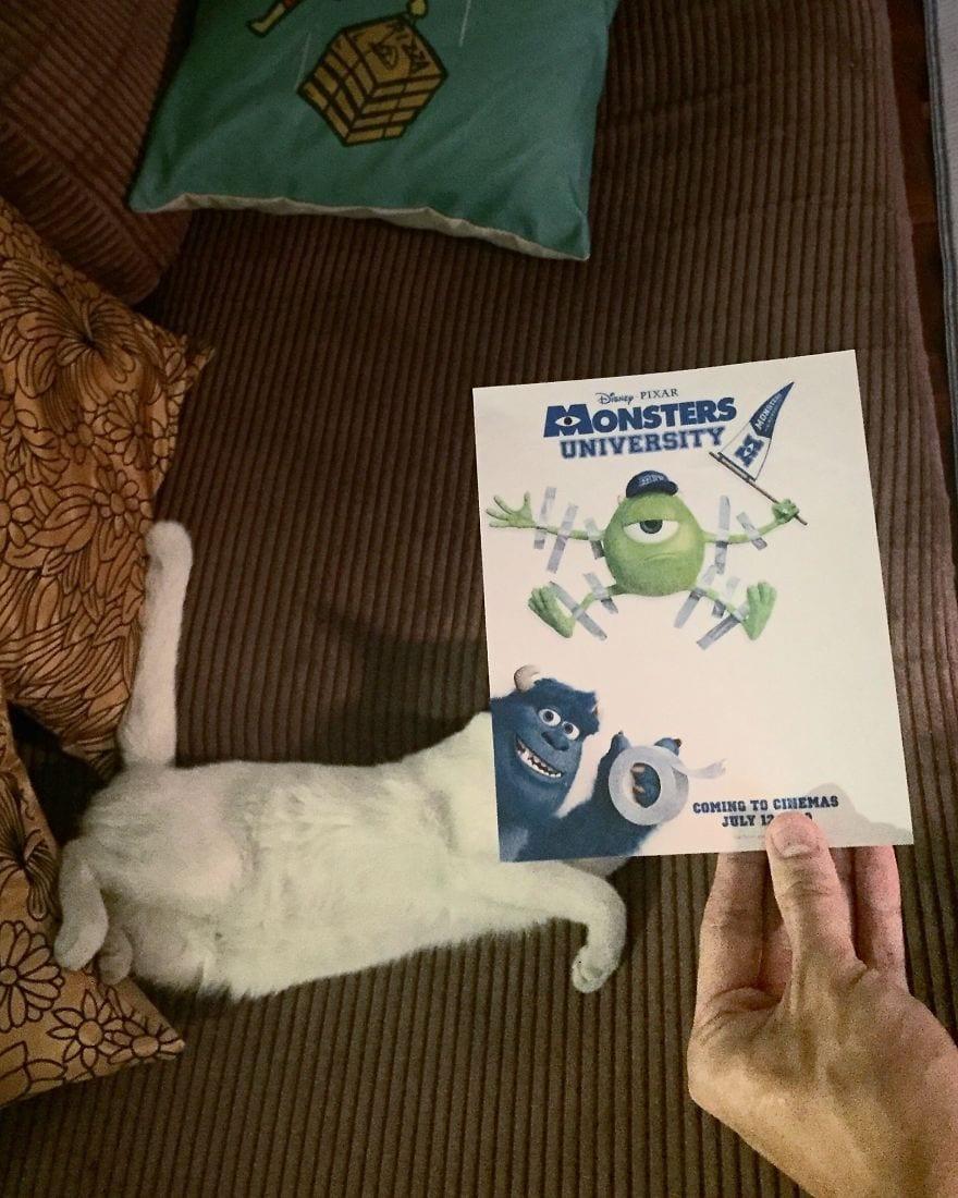 Фотограф охотится за котами, чтобы совместить их пушистые тушки и кинопостеры. А коты круто вживаются в свои роли 7