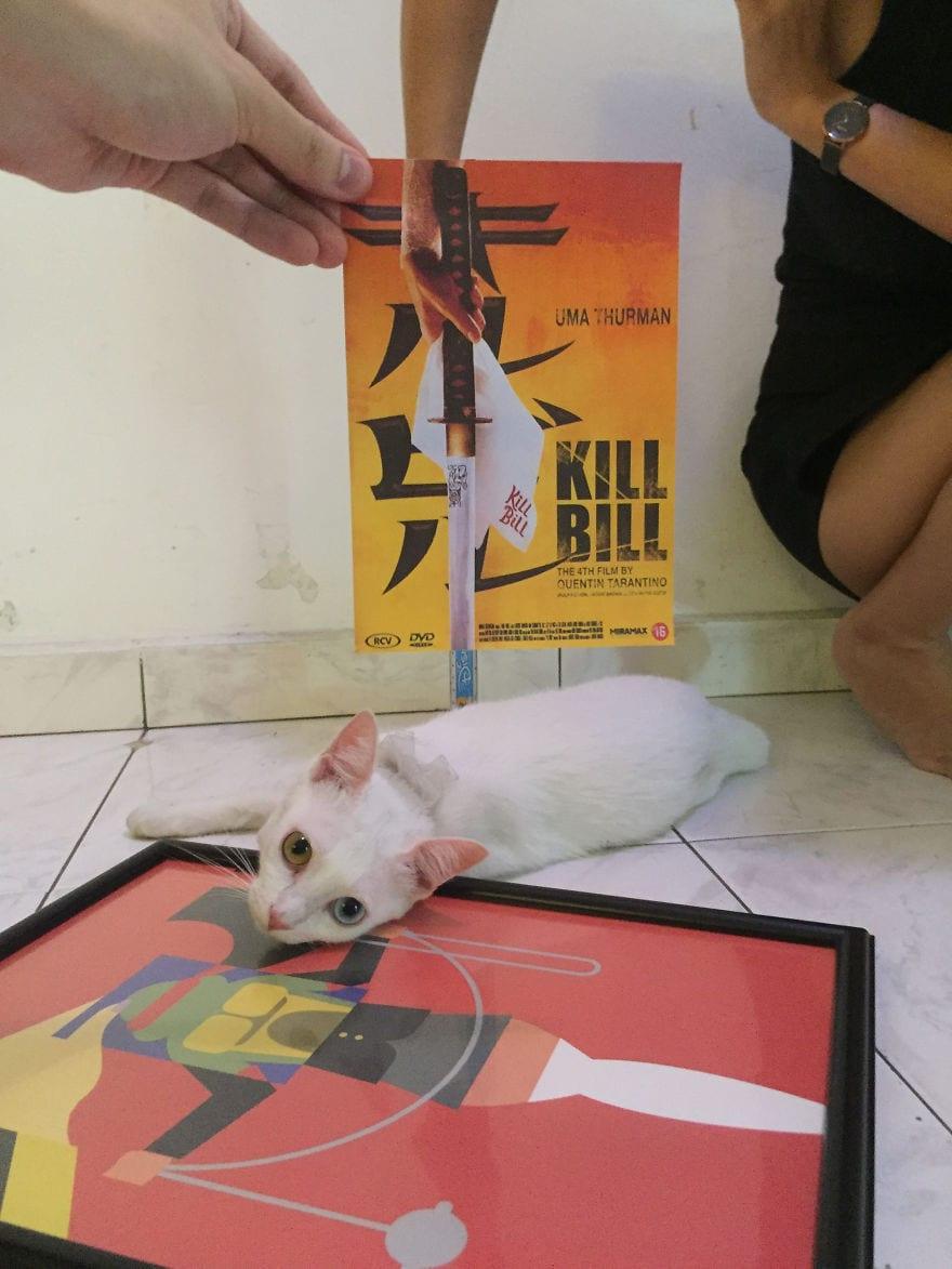 Фотограф охотится за котами, чтобы совместить их пушистые тушки и кинопостеры. А коты круто вживаются в свои роли 8
