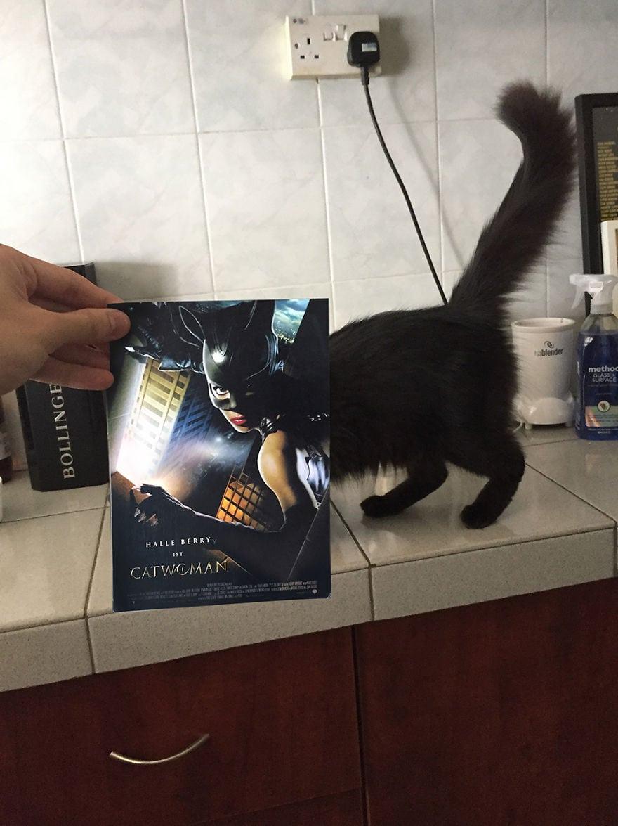 Фотограф охотится за котами, чтобы совместить их пушистые тушки и кинопостеры. А коты круто вживаются в свои роли 9