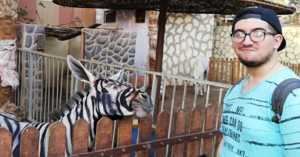 Парень нашёл в зоопарке зебр, которые выглядели очень подозрительно. Оказалось, что они — самозванцы