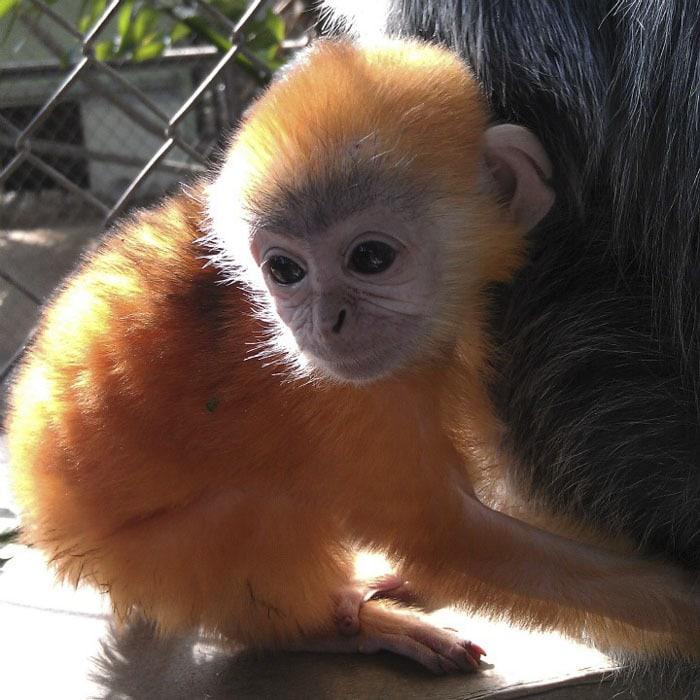 Сотрудник зоопарка поделился малоизвестными фактами о животных, которые перевернут многие стереотипы 9