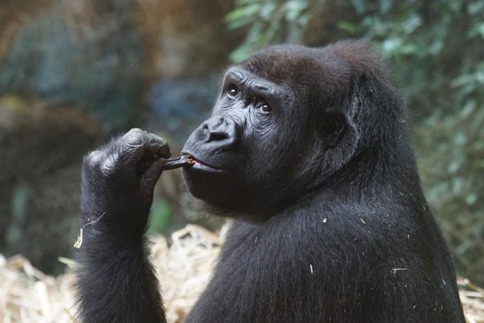 Сотрудник зоопарка поделился малоизвестными фактами о животных, которые перевернут многие стереотипы 10