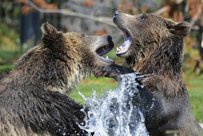 Сотрудник зоопарка поделился малоизвестными фактами о животных, которые перевернут многие стереотипы 12