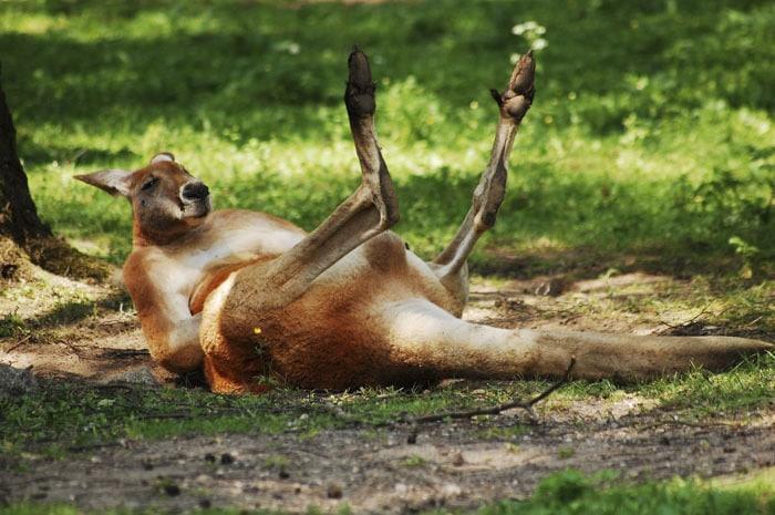 Сотрудник зоопарка поделился малоизвестными фактами о животных, которые перевернут многие стереотипы 7