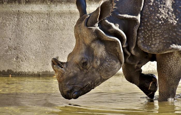 Сотрудник зоопарка поделился малоизвестными фактами о животных, которые перевернут многие стереотипы 14