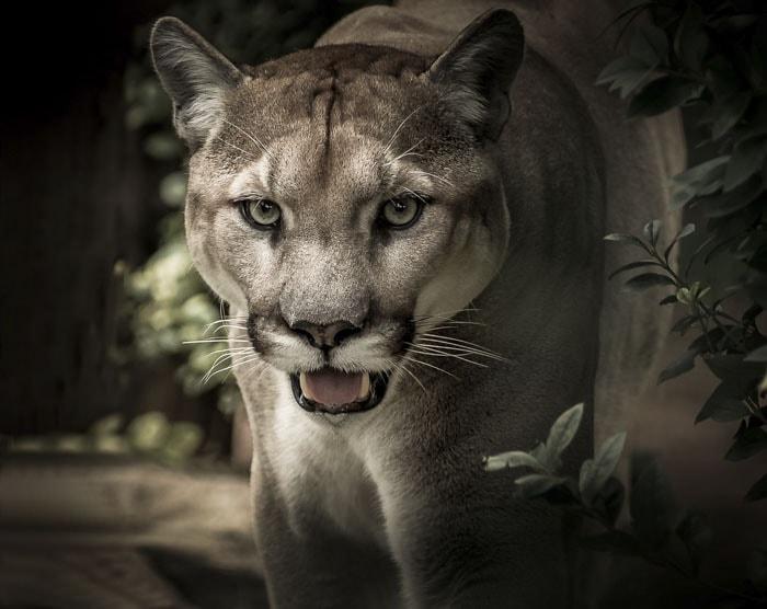Сотрудник зоопарка поделился малоизвестными фактами о животных, которые перевернут многие стереотипы 4