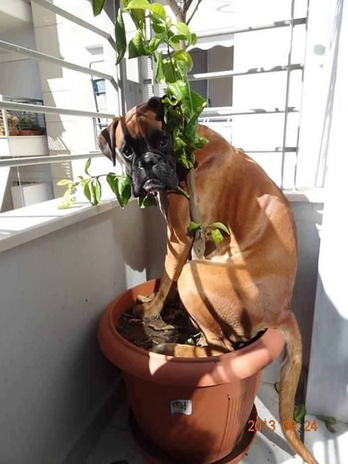 Master Of Hiding