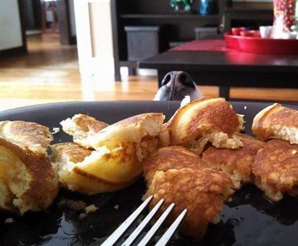 Я сказал Каде перестать смотреть на меня, пока я ем. Умная