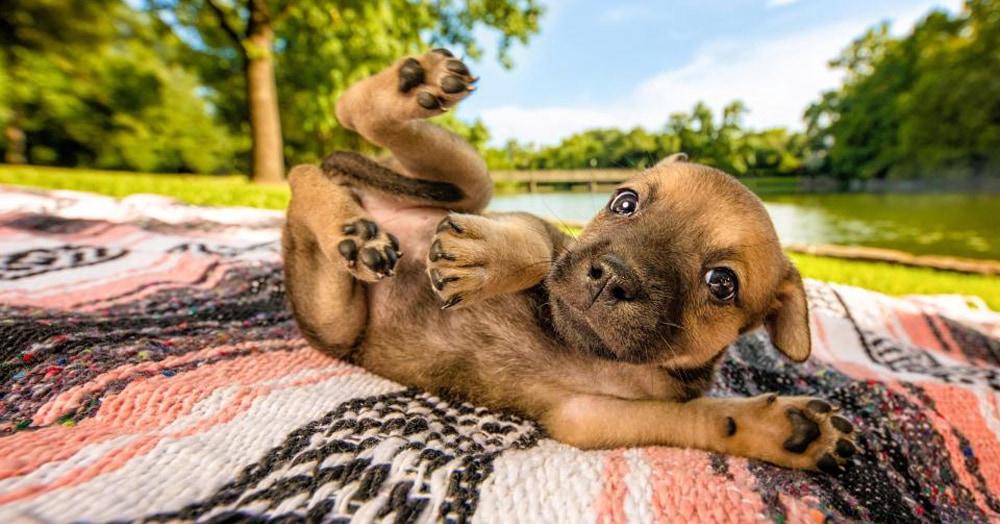 Кинологический клуб провёл конкурс собачьей фотографии, и его модели ничуть не уступают человекам