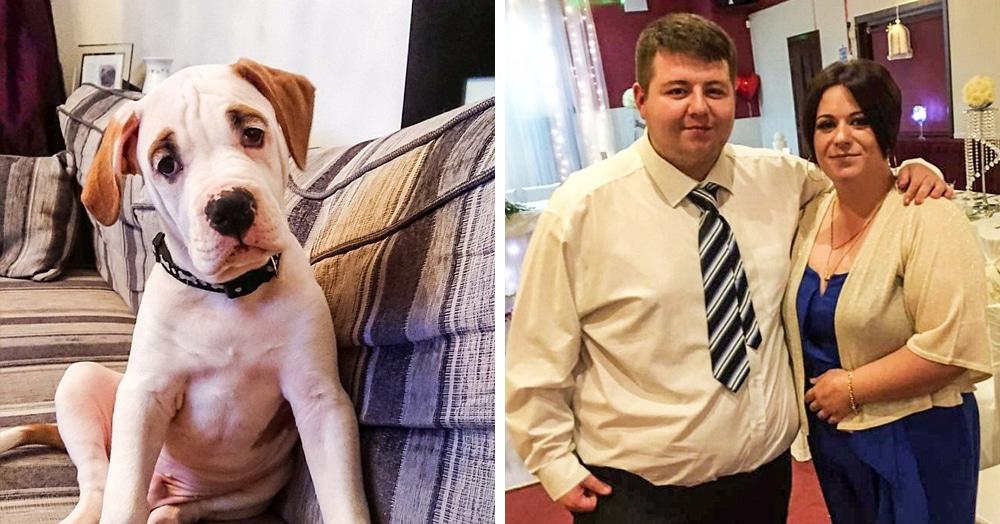 Этот пёсик с милыми бровками нанёс своим хозяевам урон в £2500 всего за полтора часа. Вот это талант!