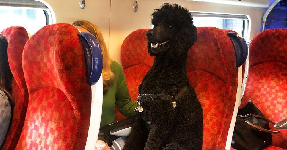 Пёс забрался на сиденье поезда и разделил пассажиров на два лагеря. Пришлось вмешаться ж/д-компании