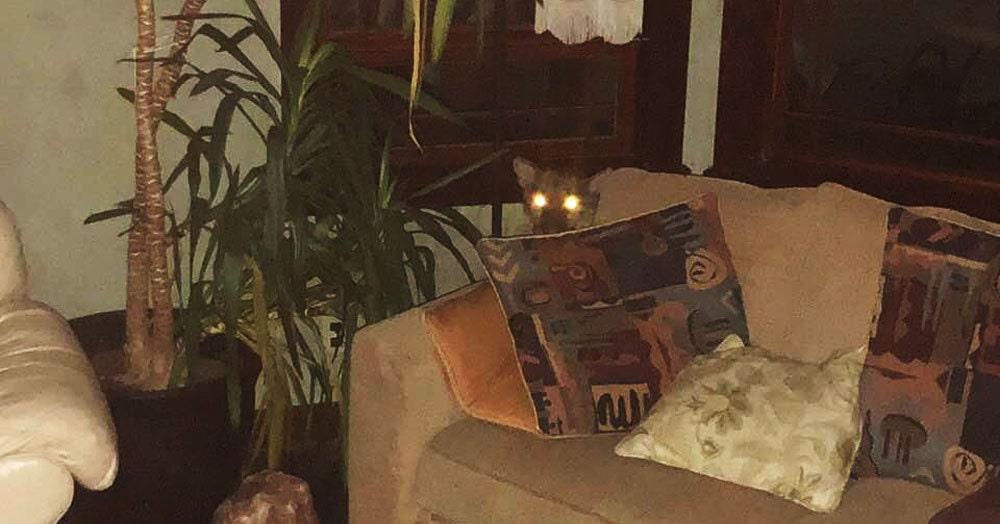 Девушка вернулась домой и нашла в своей комнате опасного гостя. Но не испугалась и уложила его спать