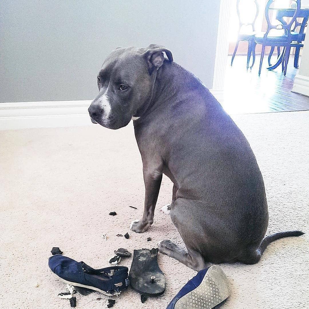 угловые угловые смешные фото виноватых собак приговоренную смерти
