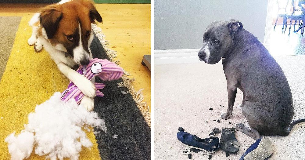 Пользователи сети поделились снимками своих провинившихся собак, на мордах которых написано всё