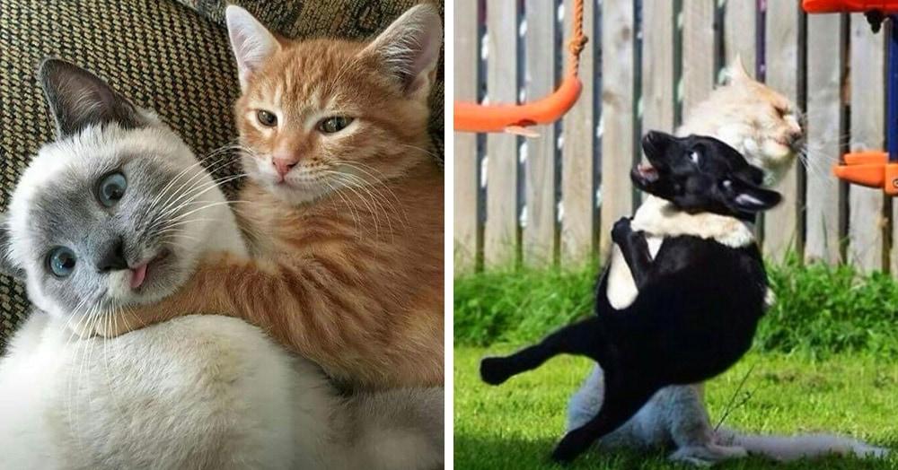 18 забавных и немного пугающих случаев, когда котики становились очень опасными типами
